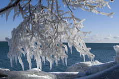 Icicle. Tree covered with ice on lake ontario Stock Photo