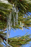 icicle fotos de stock