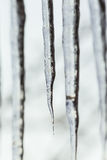 Icicle close up on the blurry background Royalty Free Stock Photos