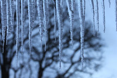 Icicle formation Royalty Free Stock Photography