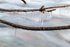 Icicle frozen on a branch of a tree near a mountain stream. The winter nature.  Royalty Free Stock Image