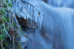 Icicle on grass by river in winter Royalty Free Stock Photos