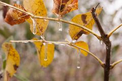 Icicle on green leaf Royalty Free Stock Photography