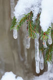 Icicle hanging from spruce branch Stock Photography
