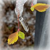 Icicle on leaf Royalty Free Stock Images