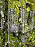 Icicle in New York City on plants Stock Photo