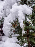 Icicle and Snow Laden Branch. Closeup of spnow laden evergreen branch with icicles Royalty Free Stock Image