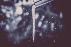 Icicle during a snowfall stock photo