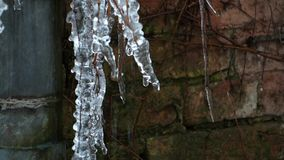 Icicle thawing stock video