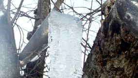 Icicle on a tree, ice decays, winter stock video footage