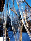 Icicle whit plants Stock Image