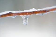 icicles ветви Стоковые Изображения