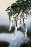 Icicles Stock Photography