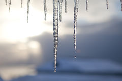 Icicles. Some icicles against the sundown Royalty Free Stock Photo