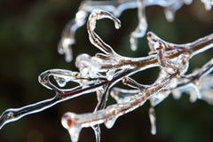 icicles Στοκ εικόνες με δικαίωμα ελεύθερης χρήσης