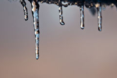 Icicles. Row of small icicles hanging Stock Images