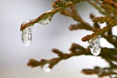 icicles Στοκ φωτογραφία με δικαίωμα ελεύθερης χρήσης