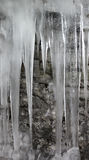 Icicles. In front of a rock wall Royalty Free Stock Photos