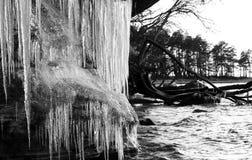 icicles Стоковое Фото