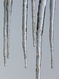 Icicles. Some icicles on a gray background Stock Photography