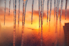 Icicles on the background of the blazing gold sunset. Royalty Free Stock Photos