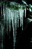 Icicles on black background Royalty Free Stock Image