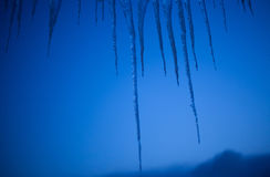Icicles on blue winter sky dusk Royalty Free Stock Image