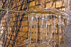 Icicles on branch Royalty Free Stock Photo