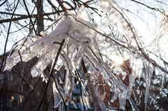 Icicles on the branch oficicles on the branch of tree in sun rays light. Stock Images