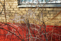 Icicles. On the branches after winter freezing rain royalty free stock photo