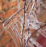 Icicles. On the branches after winter freezing rain stock photography