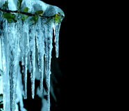 Icicles in close-up Stock Images