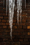 Icicles close-up on a background. Of a brick wall Royalty Free Stock Images