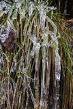 Icicles cover a sod Royalty Free Stock Image