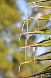Palm leaf icicles Stock Photo