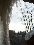 With icicles are falling drops Royalty Free Stock Image