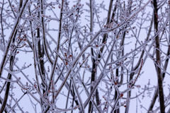 Icicles from first winter storm Royalty Free Stock Photos