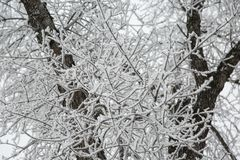 Closer Look Frost Covered Tree. Icicles formed on tree on a cold winters day royalty free stock photo