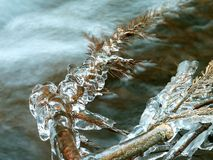 Free Icicles, Frozen Twig In The Winter Royalty Free Stock Image - 10110866
