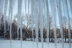Icicles handing in front of tree landscape Stock Photo