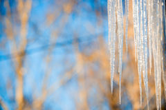 Icicles hanging against a blue sky Stock Photos