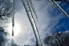 Icicles hanging down with the background sun and sky. Winter icicles melting in the sun. Multiple icicles of different lengths represented stock photography