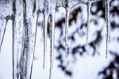 Icicles hanging from the Roof Royalty Free Stock Image