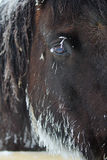 Icicles on a horse. Royalty Free Stock Images