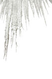 Icicles isolated on white Royalty Free Stock Photo