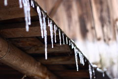 Icicles. Little icicles hanging from wooden shelter Royalty Free Stock Photo