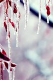 Icicles over branches. With copyspace royalty free stock image