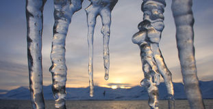 Icicles bird mountains sunset Stock Photo