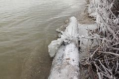 Icicles with rime on branches on the shore of the freezing river. In autumn, Ob reservoir, Siberia, Russia Stock Images