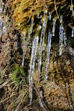 Icicles on rock. Icicles in sunshine on a lichen and moss covered rock face Stock Photos